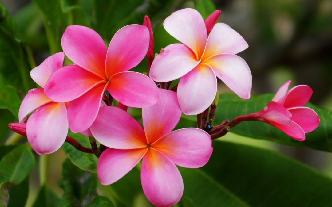 The Flowers of Hawaii