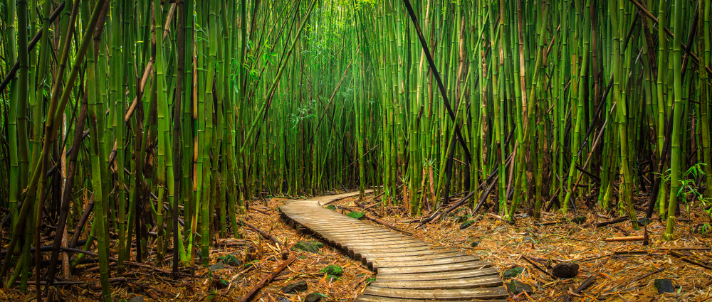 Walkway in Bamboo Forest